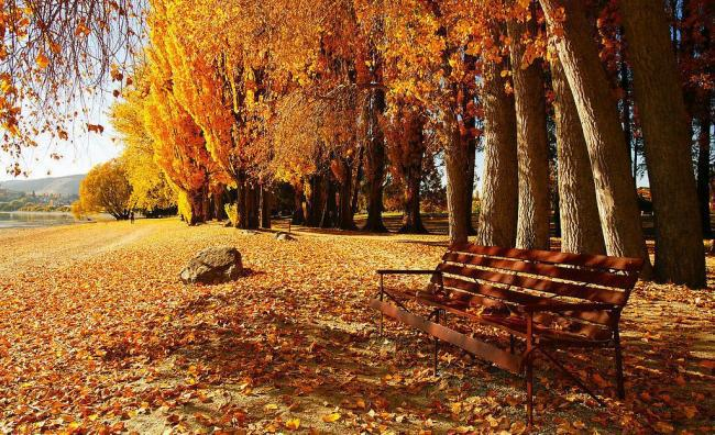 7x5ft-Photo-Studio-Photography-Backdrops-Autumn-Background-Prop-Pictorial-Cloth-QT-1093